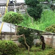 庭木・花壇のお手入れ作業