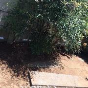 除草剤散布と草むしり作業