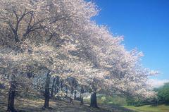 毎日の暮らしのお手伝い、古河市の【便利屋sakura】にお任せください!